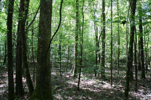 Snake Branch Road